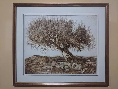 Pyrography Pyrography - Olive Tree Paper Pyrography by Darko Latkovic