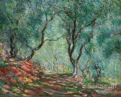 Painting - Olive Tree Wood In The Moreno Garden by Claude Monet