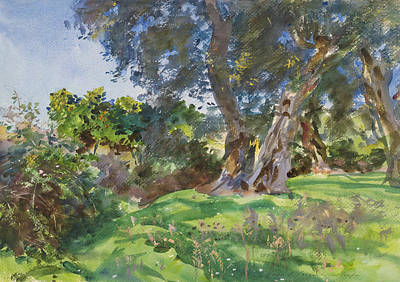 Greece Watercolor Painting - Olive Trees, Corfu by John Singer Sargent