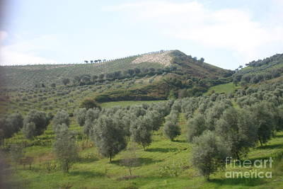 Olive Trees Art Print by Dennis Curry