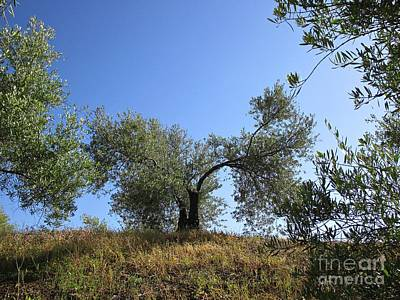 Photograph - Olive Trees Near Olvera by Chani Demuijlder