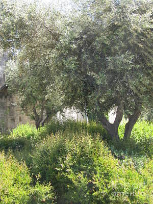 Photograph - Olive Trees Israel by Donna L Munro