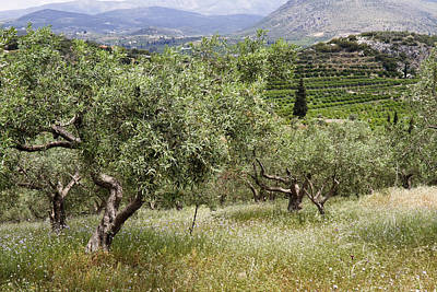Photograph - Olives by Shirley Mitchell