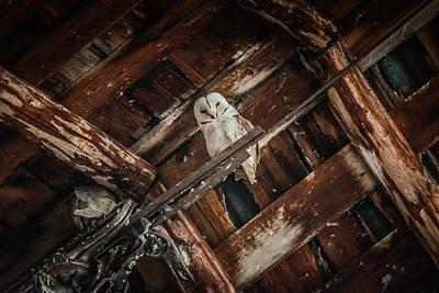 Photograph - Olsen Barn Owls by Jan Davies