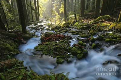 Photograph - Olympic Mountain Streams by Adam Jewell