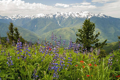 Photograph - Olympic Mountain Wildflowers by Brian Harig