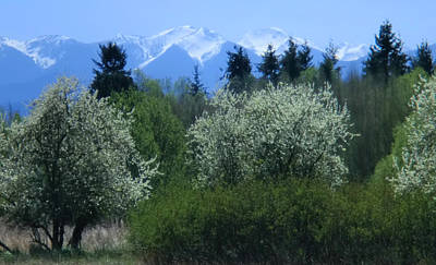 Photograph - Olympic Mountains - Washington - Dungeness County Park by Marie Jamieson