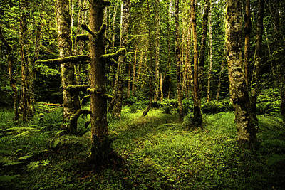 Photograph - Olympic Rainforest, Washington by TL Mair