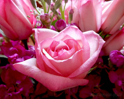 Photograph - Ombre Pink Rose Bouquet by Kristin Aquariann