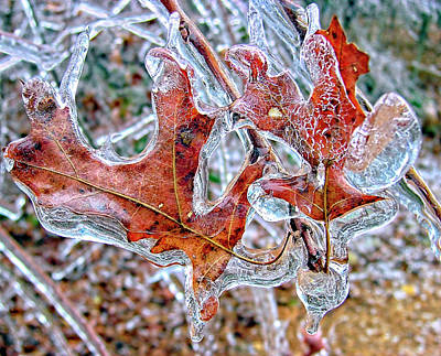 Photograph - On A Cold Day by Susan Leggett