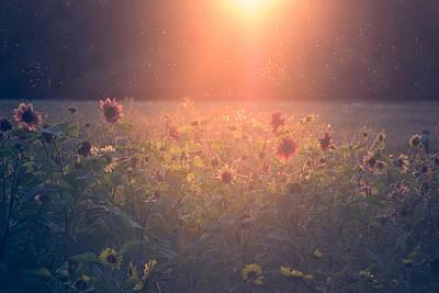 Pollen Photograph - On A Warm Summers Evening by Chris Fletcher