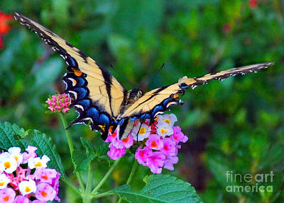 Dog And Butterfly Photograph - On A Wing N A Prayer by Skip Willits