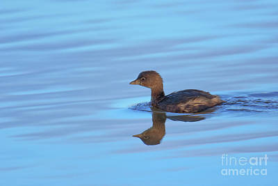 Photograph - On Blue Water by Craig Leaper