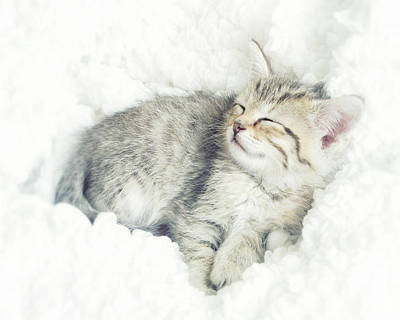 Print Cat Photograph - On Cloud Nine by Amy Tyler