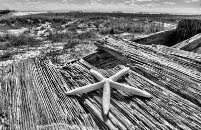 Photograph - On Dauphin Island by JC Findley