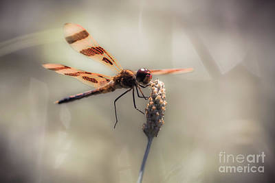 Photograph - On Dragonfly Wings by Kim Clune
