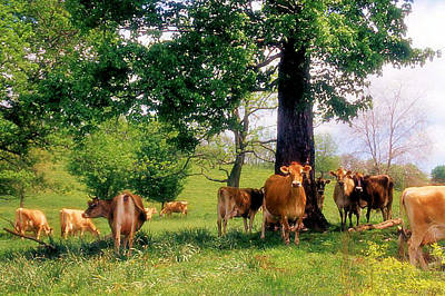 On Emerald Pastures Art Print by Jan Amiss Photography