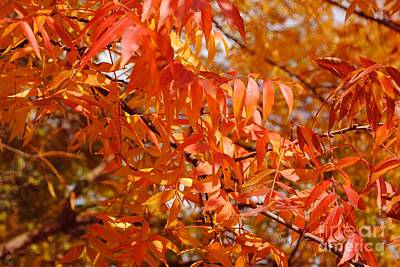 Pistache Tree Photograph - On Fire by DiDi Higginbotham
