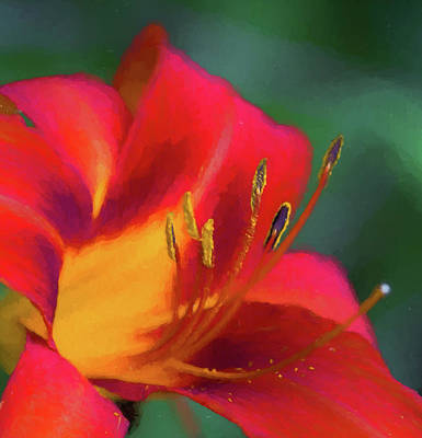 Photograph - On Fire Orange by Kathy Clark