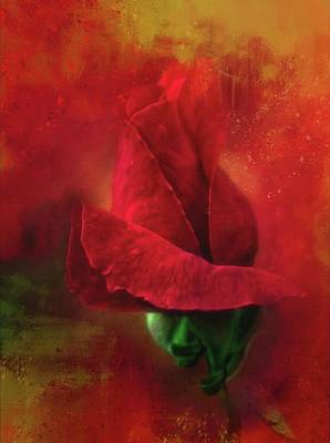 Photograph - On Fire - Red Red Rose by HH Photography of Florida