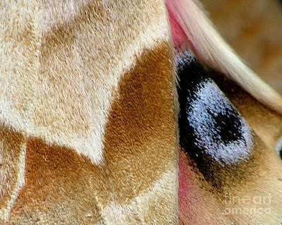 Photograph - On Fragile Moth's Wings by Katie LaSalle-Lowery