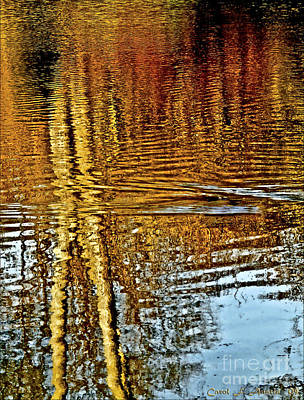 On Golden Pond Art Print by Carol F Austin