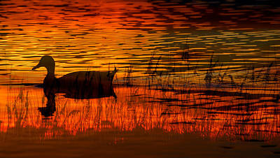 Photograph - On Golden Pond by David Lee Thompson