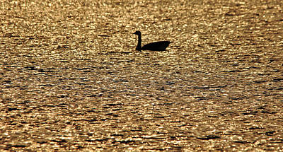 Photograph - On Golden Pond by Debbie Oppermann