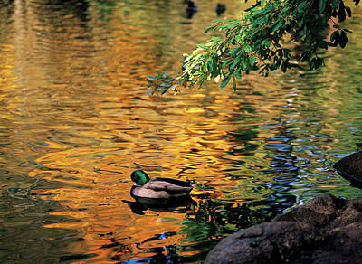 Jim Nelson Photograph - On Golden Pond by Jim Nelson