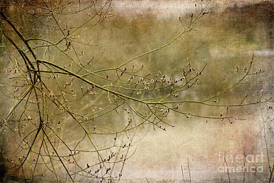 Photograph - On Golden Pond by Liz Alderdice