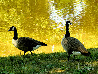 Canadian Geese Digital Art - On Golden Pond by Mindy Newman