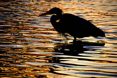 Photograph - On Golden Pond by Neil Shapiro