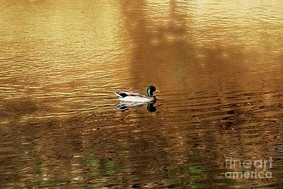 Photograph - On Golden Pond by Yumi Johnson