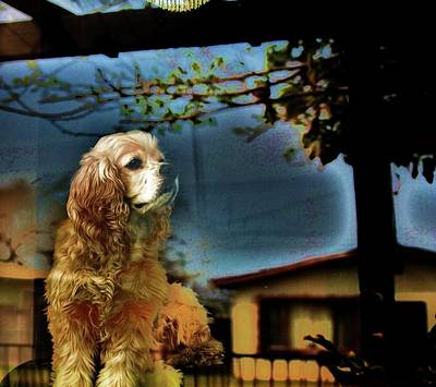 Cocker Spaniel Wall Art - Photograph - On Guard by Helen Carson
