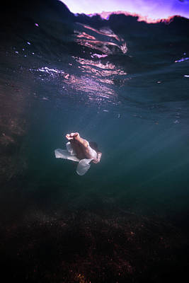 Photograph - On Her Way To The Deep by Gemma Silvestre
