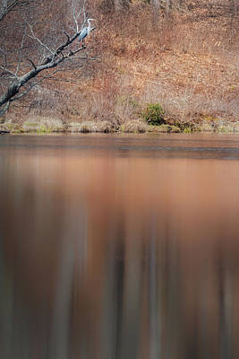 Photograph - On Heron Pond by Bill Wakeley