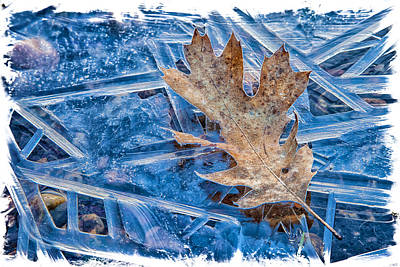 Photograph - On Ice by Jonathan Nguyen