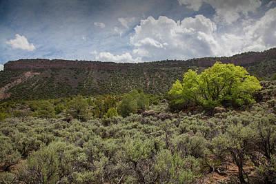 Photograph - On La Madrea Range. by Steve Gravano