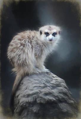 Meerkat Digital Art - On Lookout by Anita Hubbard