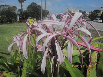 Florida Flowers Drawing - On My Walk by Paul Meinerth