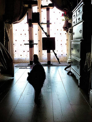 Cat Photograph - On My Way by Camille Lopez