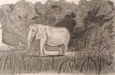 Drawing - On Safari by Tony Clark