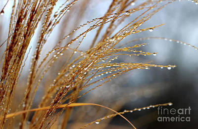 Photograph - On Such A Winters Day by Karen Adams