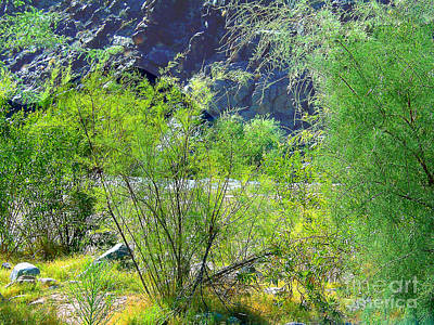 Photograph - On The Bank Of The Colorado River In Arizona  Er by Merton Allen