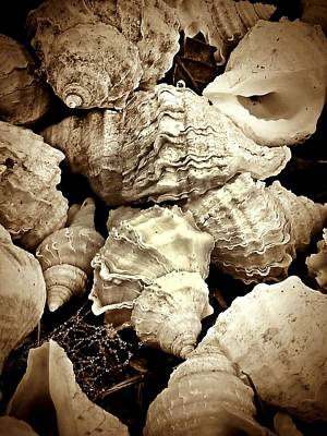 On The Beach - Shells In Sepia Art Print