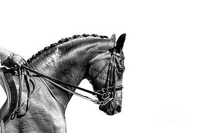 Photograph - On The Bit - Dressage Series by Michelle Wrighton