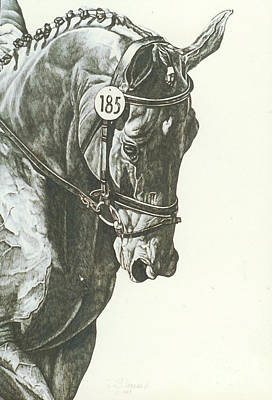 Dressage Drawing - On The Bit by Suzanne Leonard