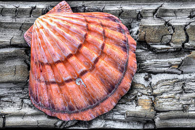 Photograph - On The Boardwalk In Orange Beach by JC Findley