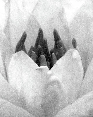 Photograph - On The Dark Side 03 - Water Lily - Bw - Water Paper by Pamela Critchlow