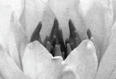 Photograph - On The Dark Side 01 - Water Lily - Bw - Water Paper by Pamela Critchlow